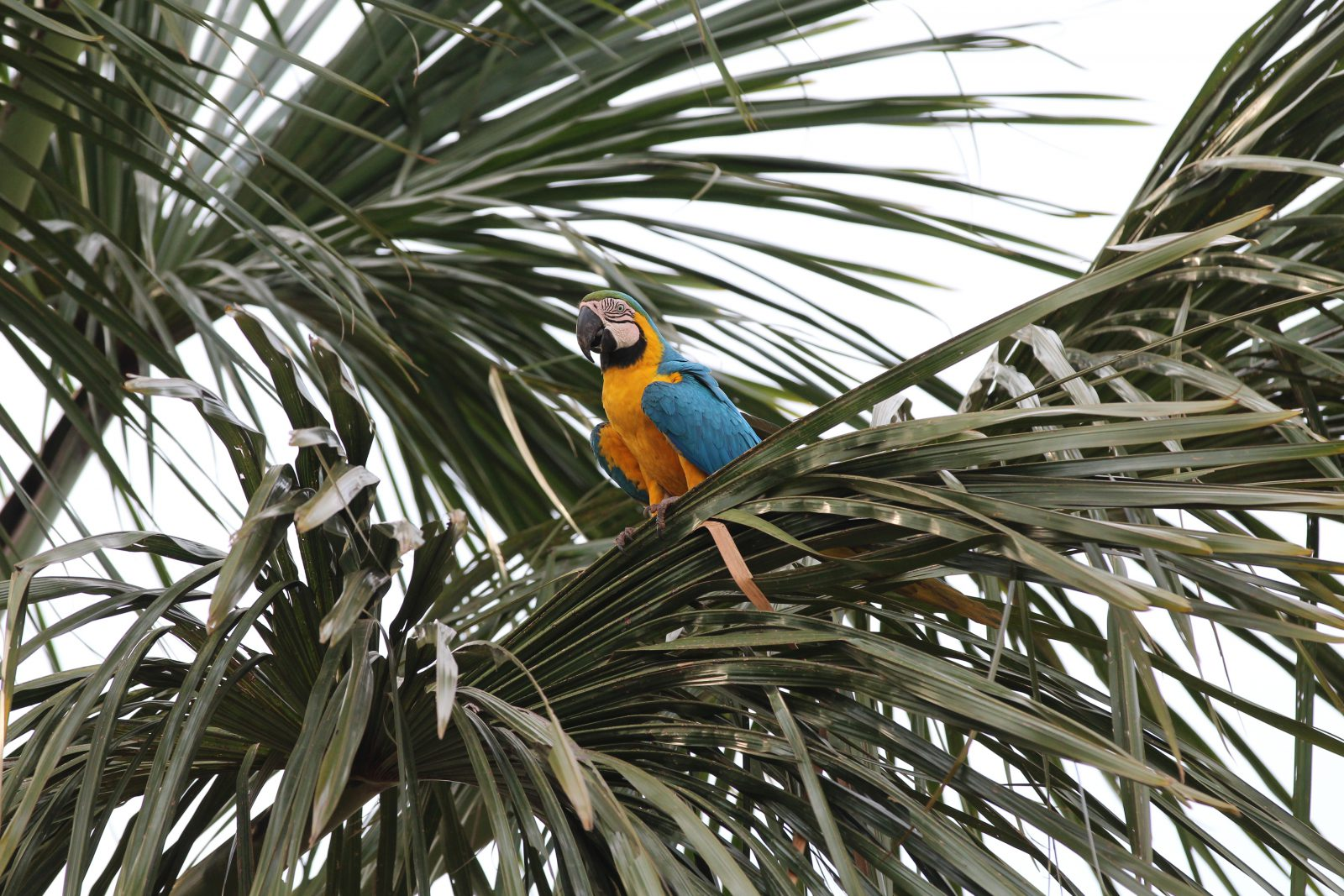 Sonhar com Arara na árvore indica independência e segurança.