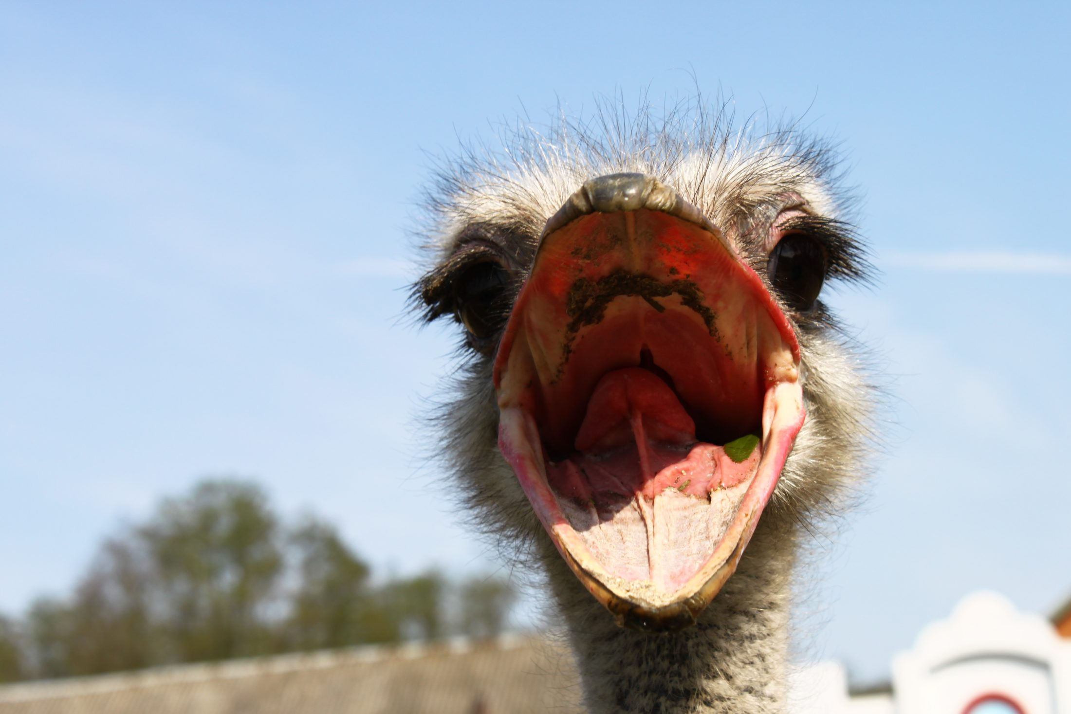 Sonhar com avestruz e suas penas caídas pelo chão representa lutas com entes queridos.