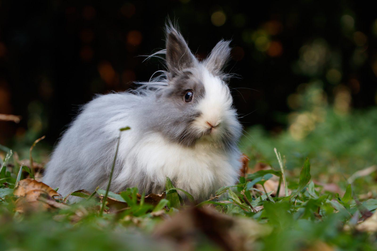 Sonhar com coelho filhote é sinal de bebê a caminho.