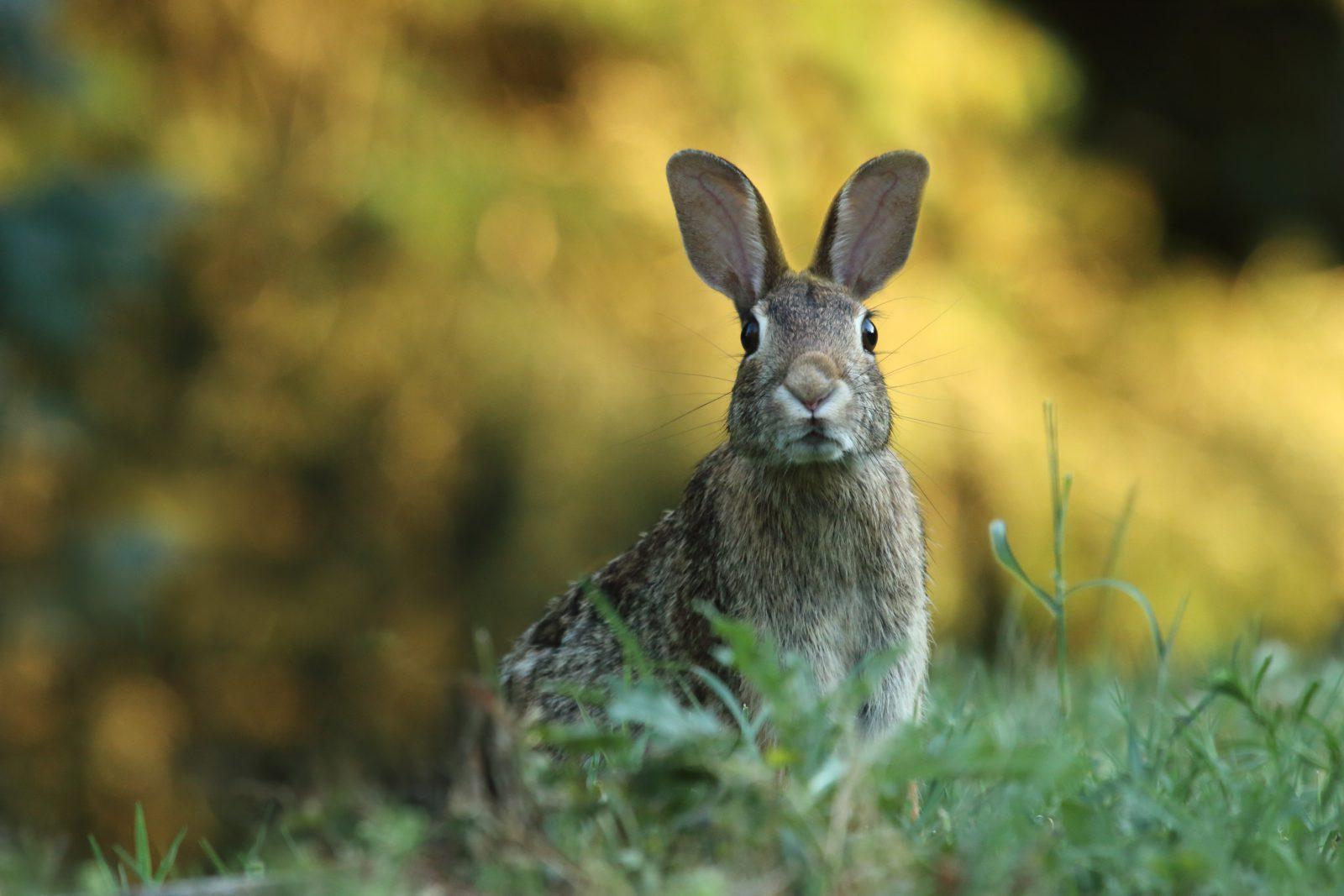 Sonhar com coelho morto por você é sinal de mundanças na vida.