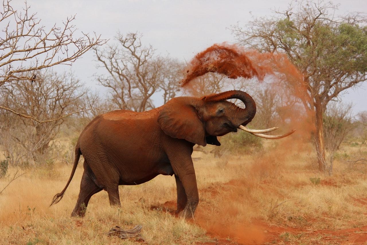 Sonhar com elefante montando nele significa controle da situação.