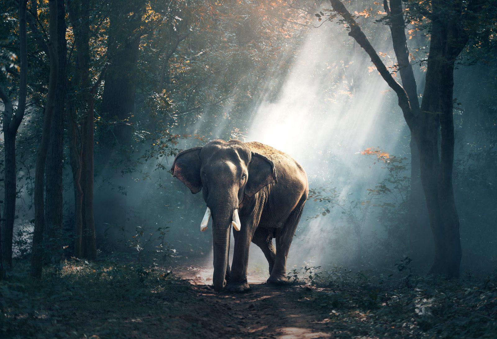 Sonhar com elefante em seu habitat natural significa superação.
