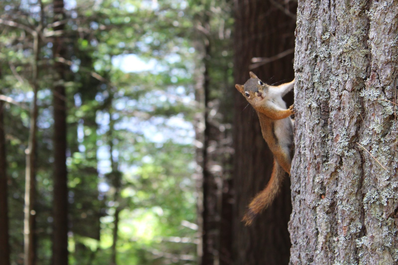 Sonhar que mata um esquilo simboliza mudanças positivas na sua vida