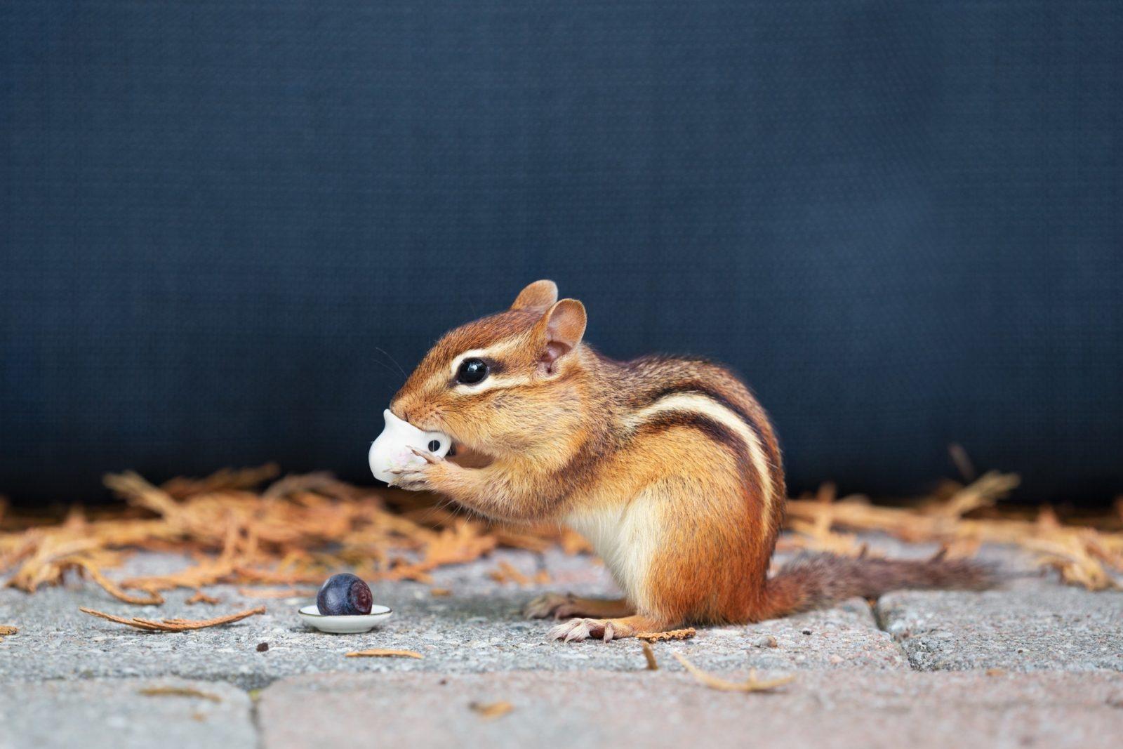 sonhar com esquilo