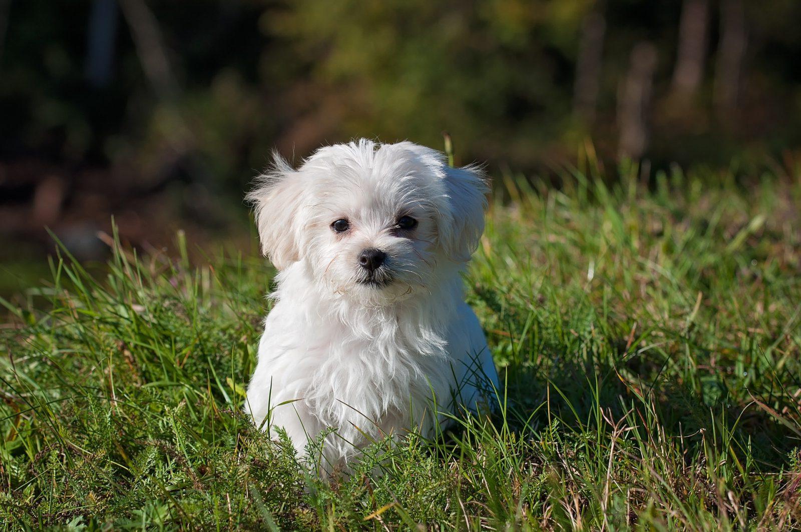 Sonhar com filhote de cachorro branco significa que as áreas da sua vida estão se desenvolvendo bem.