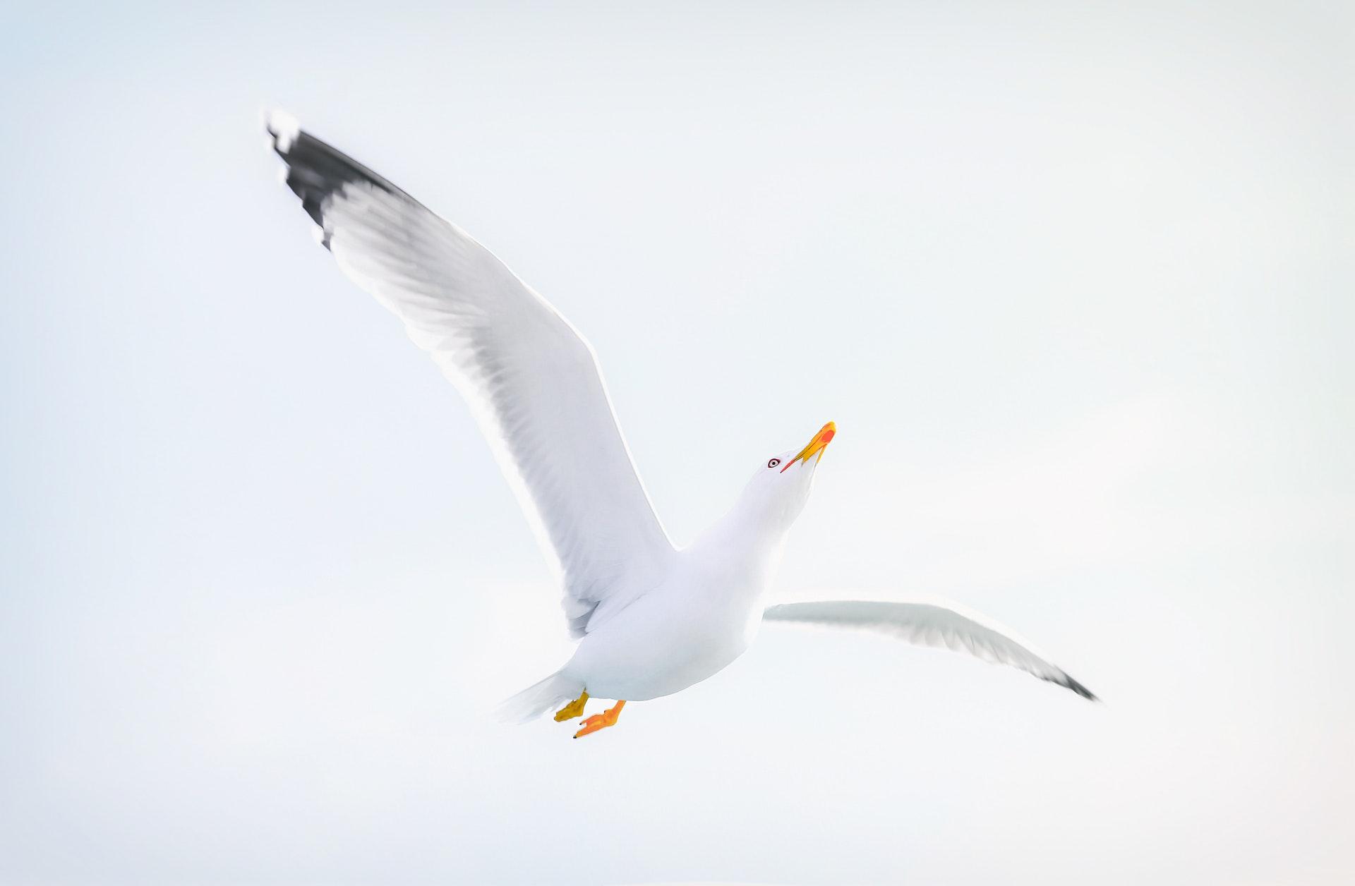 Sonhar com gaivota significa ter amais atenção com as pessoas ao seu redor.