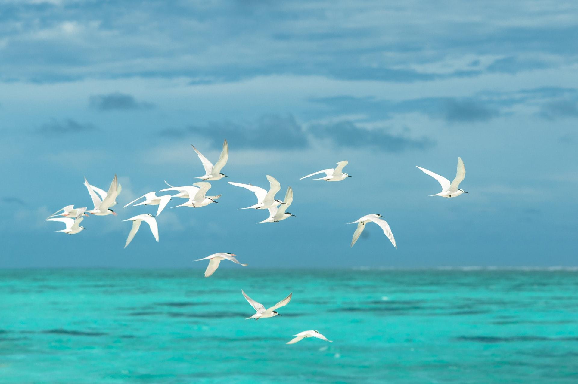 Sonhar com gaivota é sinal de coisas positivas.