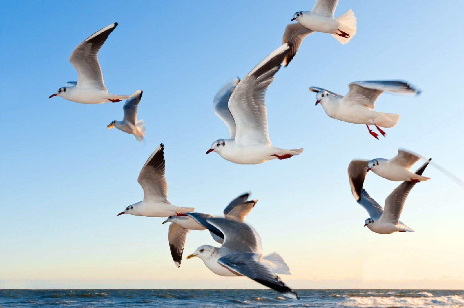 Sonhar com gaivota atacando é sinal de que sua coragem e força serão desafiados.