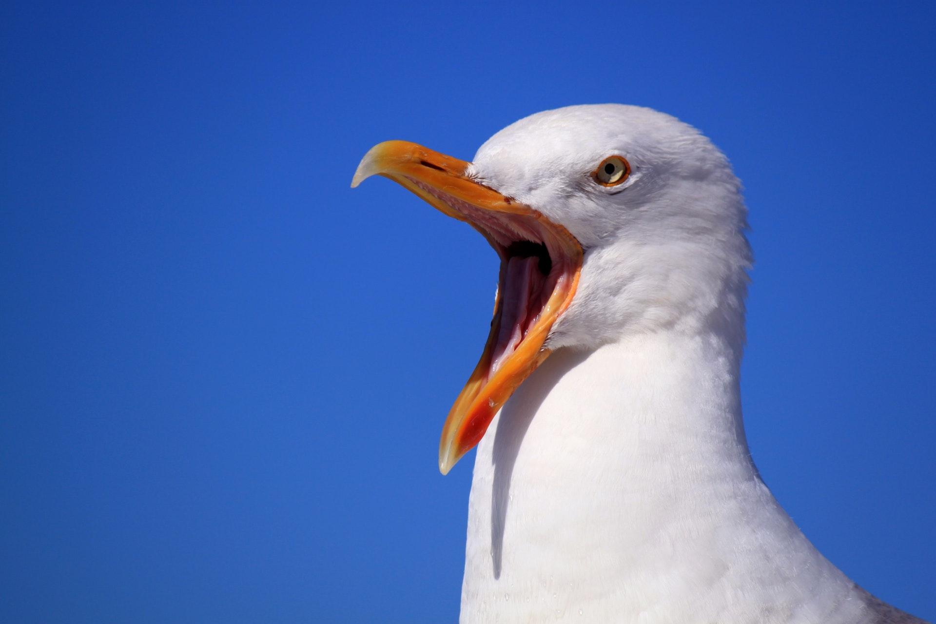 Sonhar com gaivota gigante é sinal de insegurança.