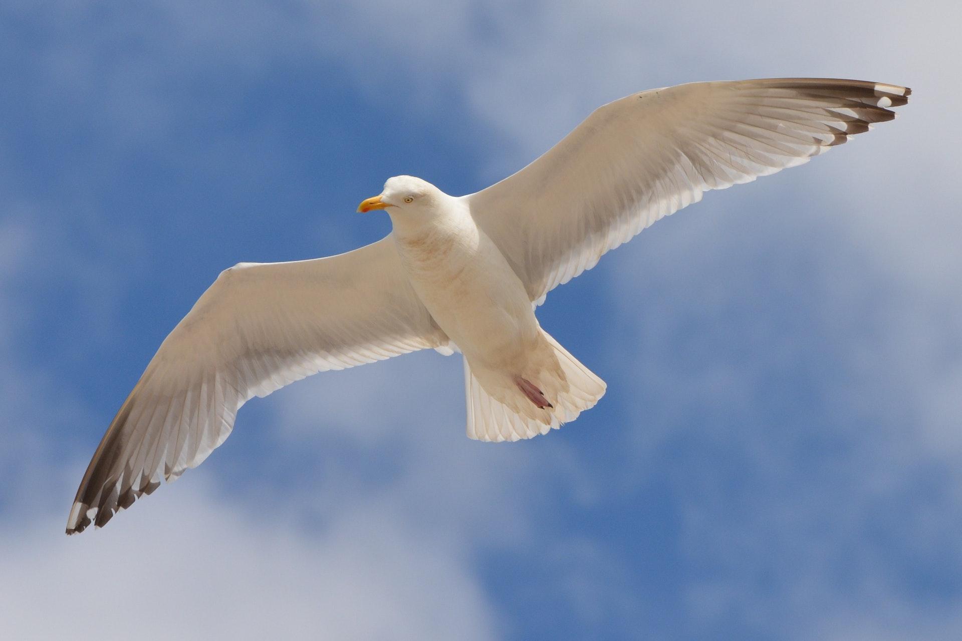 Sonhar com gaivota voando tem à ver com a intuição.