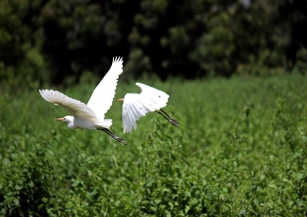 Sonhar com garça voando indica sorte.