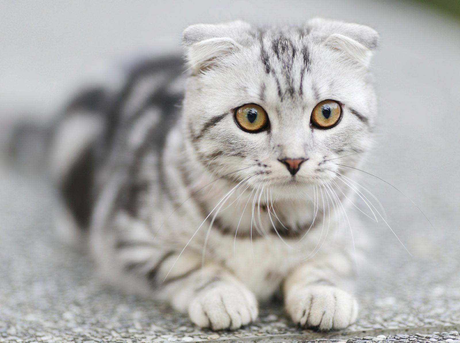 Sonhar com gato preto e branco é sinal para se alegrar.