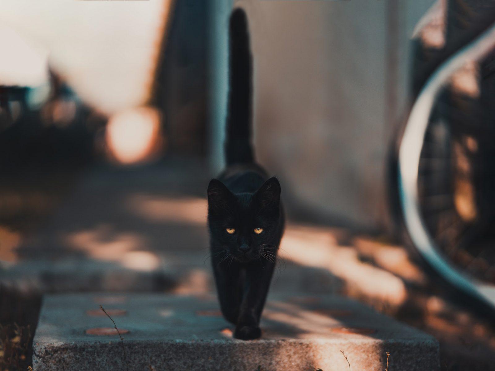 Sonhar com gato preto indica cautela antes de tomar decisões.