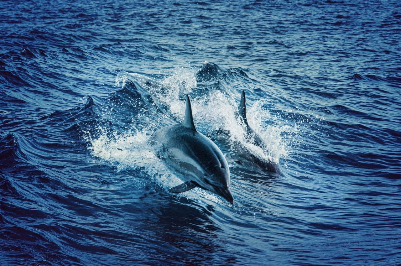 Sonhar com golfinho está ligado à ressurreição.
