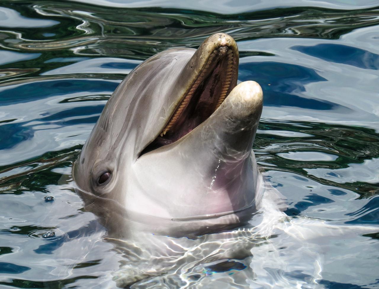 sonhar com golfinho é positivo