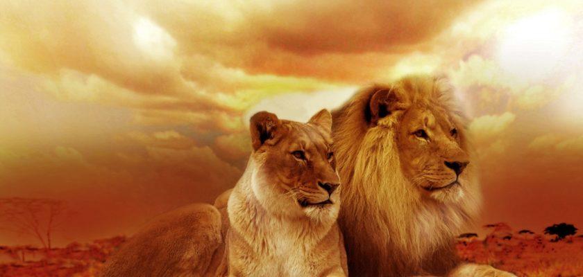 sonhar com leão