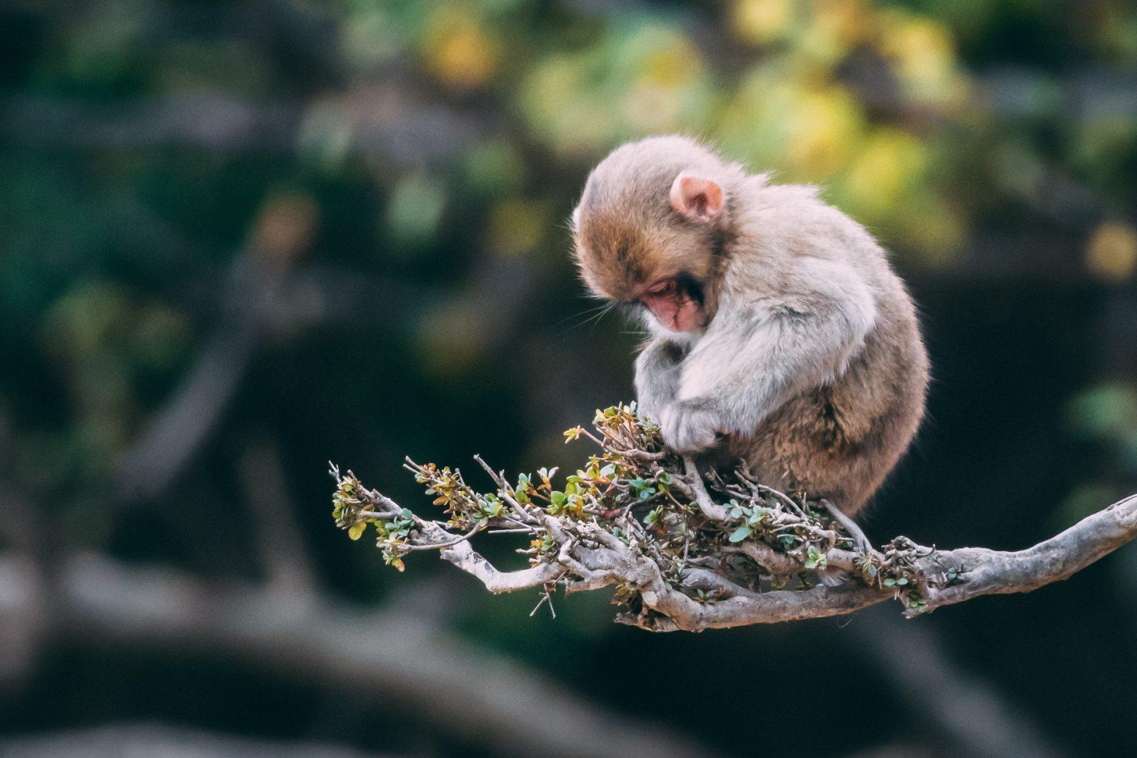 Sonhar com macaco e ter medo é sinal de caos.