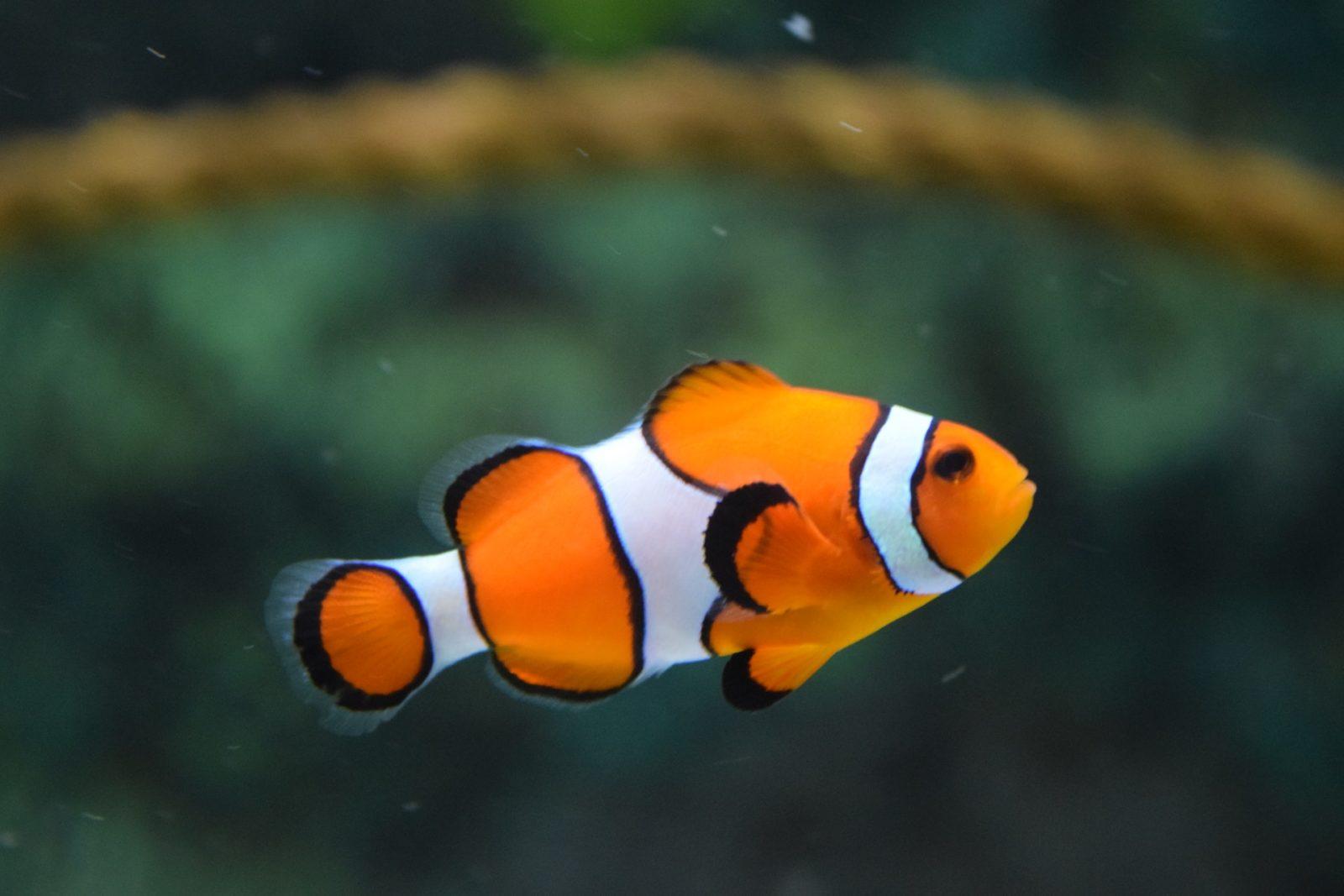 Sonhar com peixe nadando pode ser situação perigosa, riqueza ou sorte.