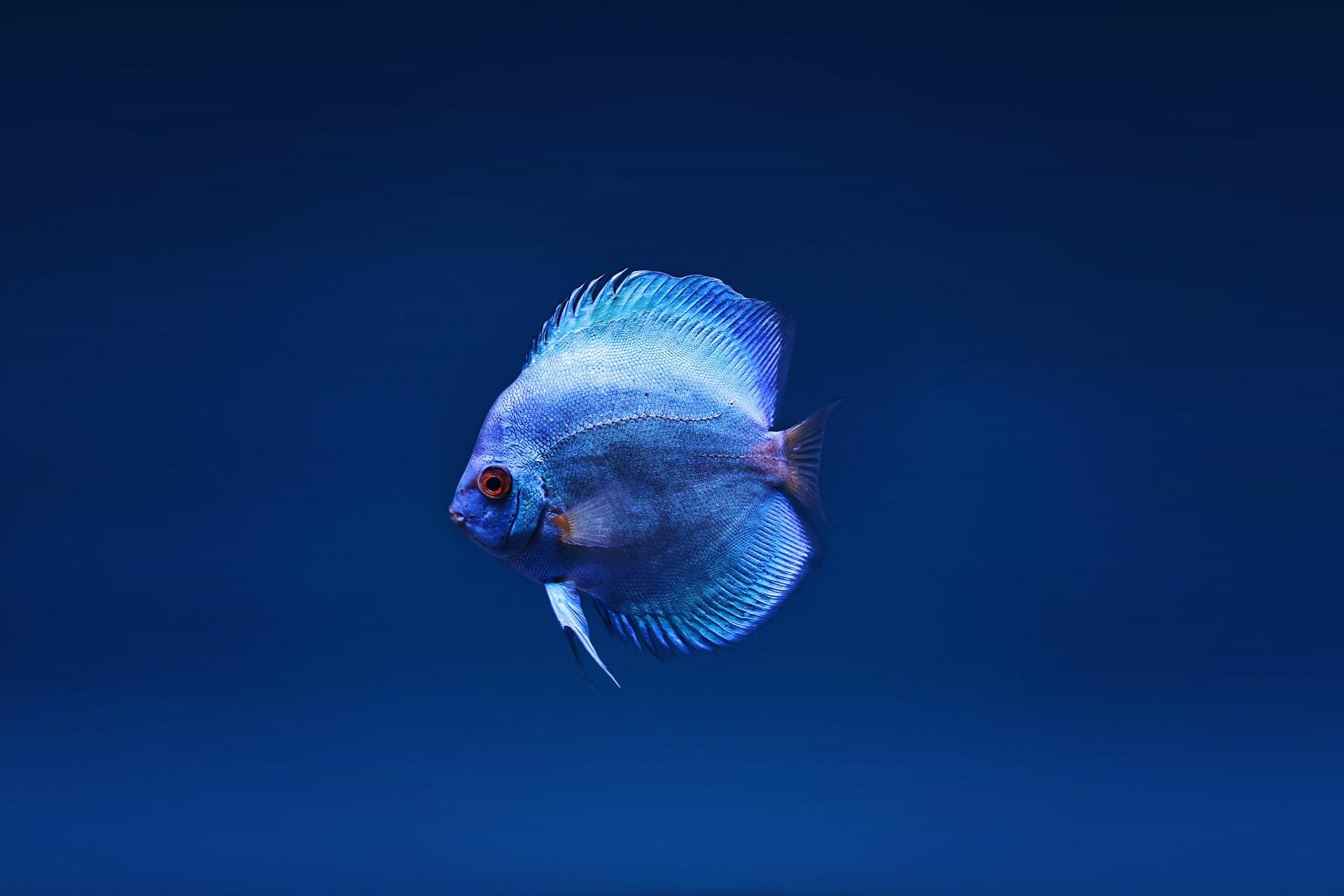 Sonhar com peixe fora d'água não é bom sinal.