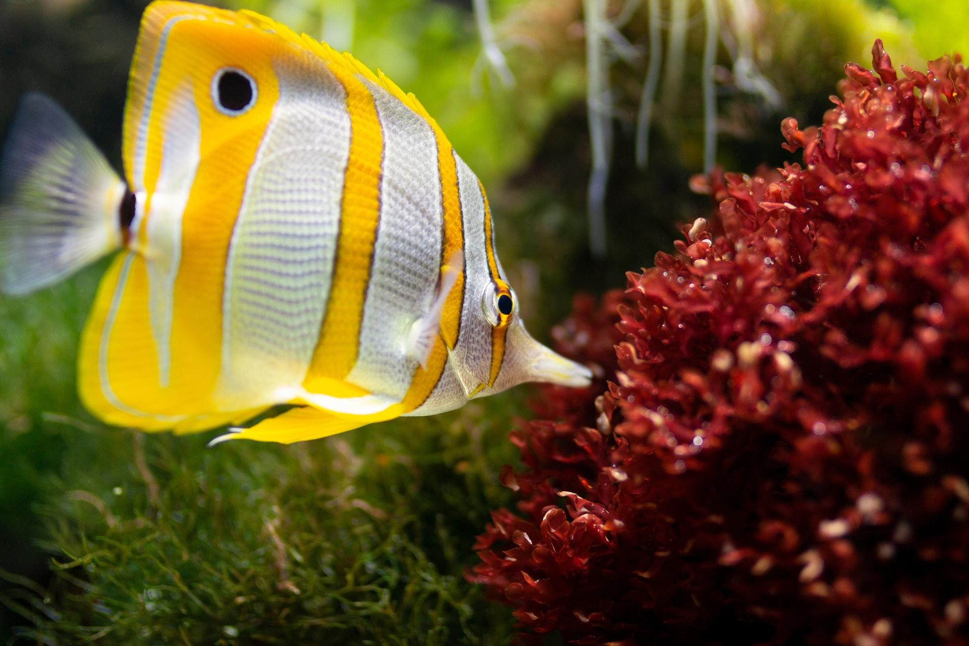 Sonhar com peixe no aquário é sinal de emoções reprimidas.
