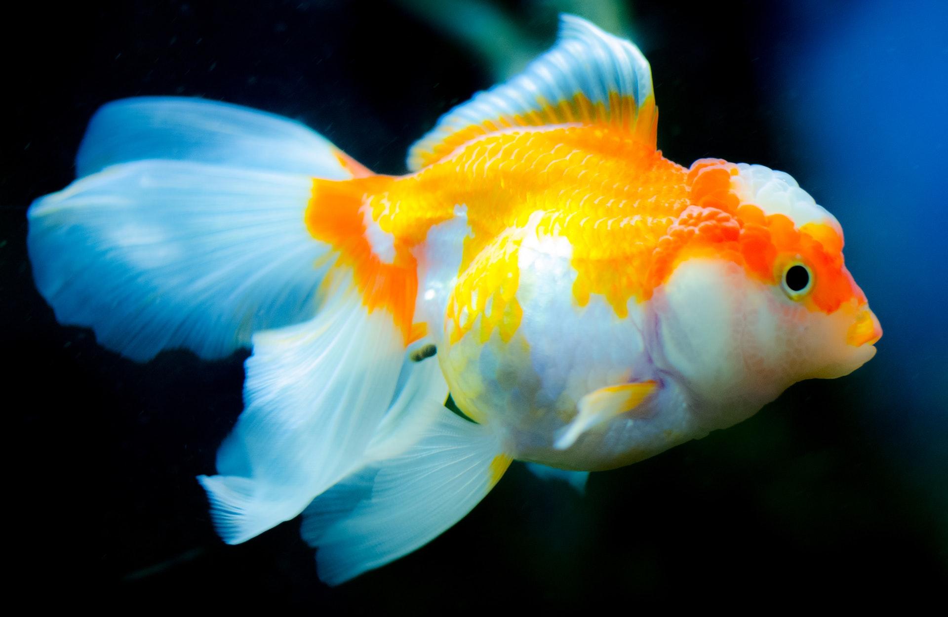 Sonhar com peixe grande é sinal de fartura.
