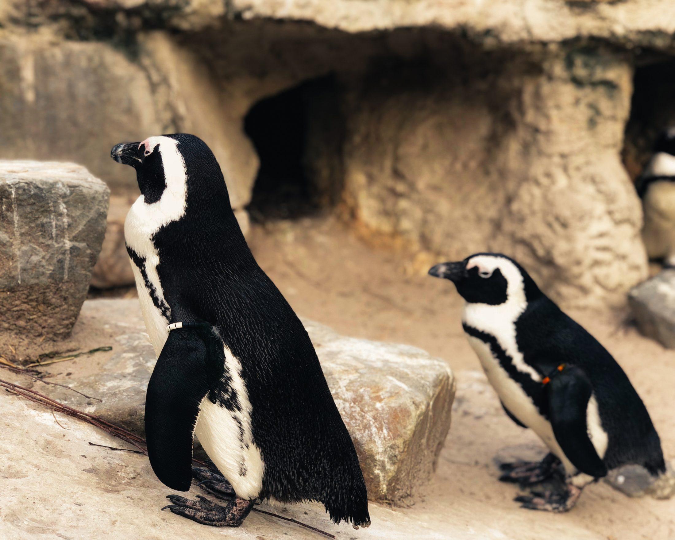 Sonhar com pinguim distante é alerta pra problemas alheios.