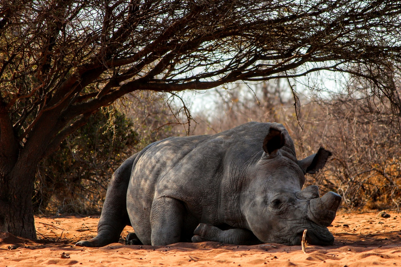 Sonhar com rinoceronte significa equilíbrio e confiança.
