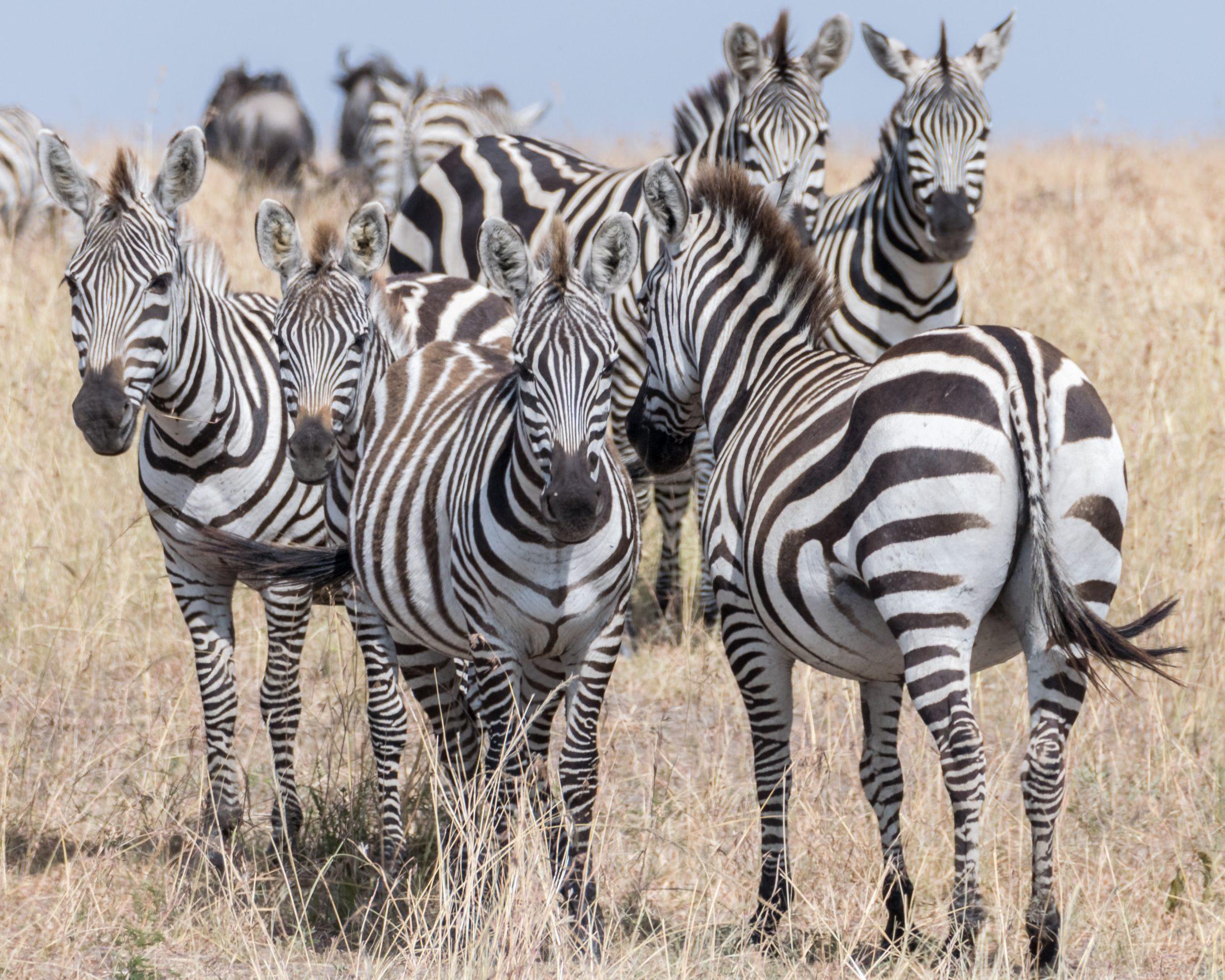 Sonhar com zebra doente é sinal de descuido com a saúde.