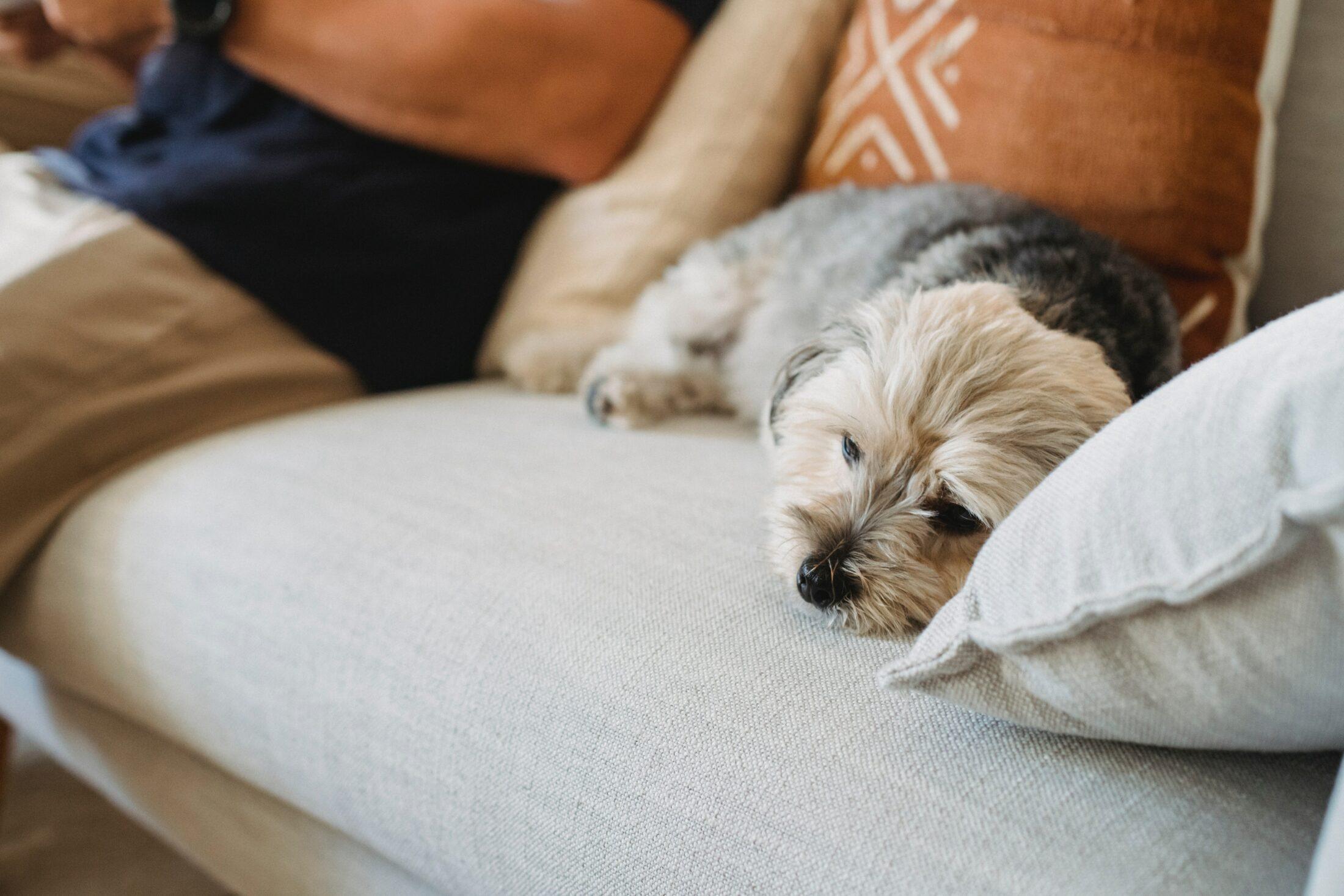 Se durante a noite de sono do filhote ocorrer acidentes, inlcua mais saídas para se aliviar.
