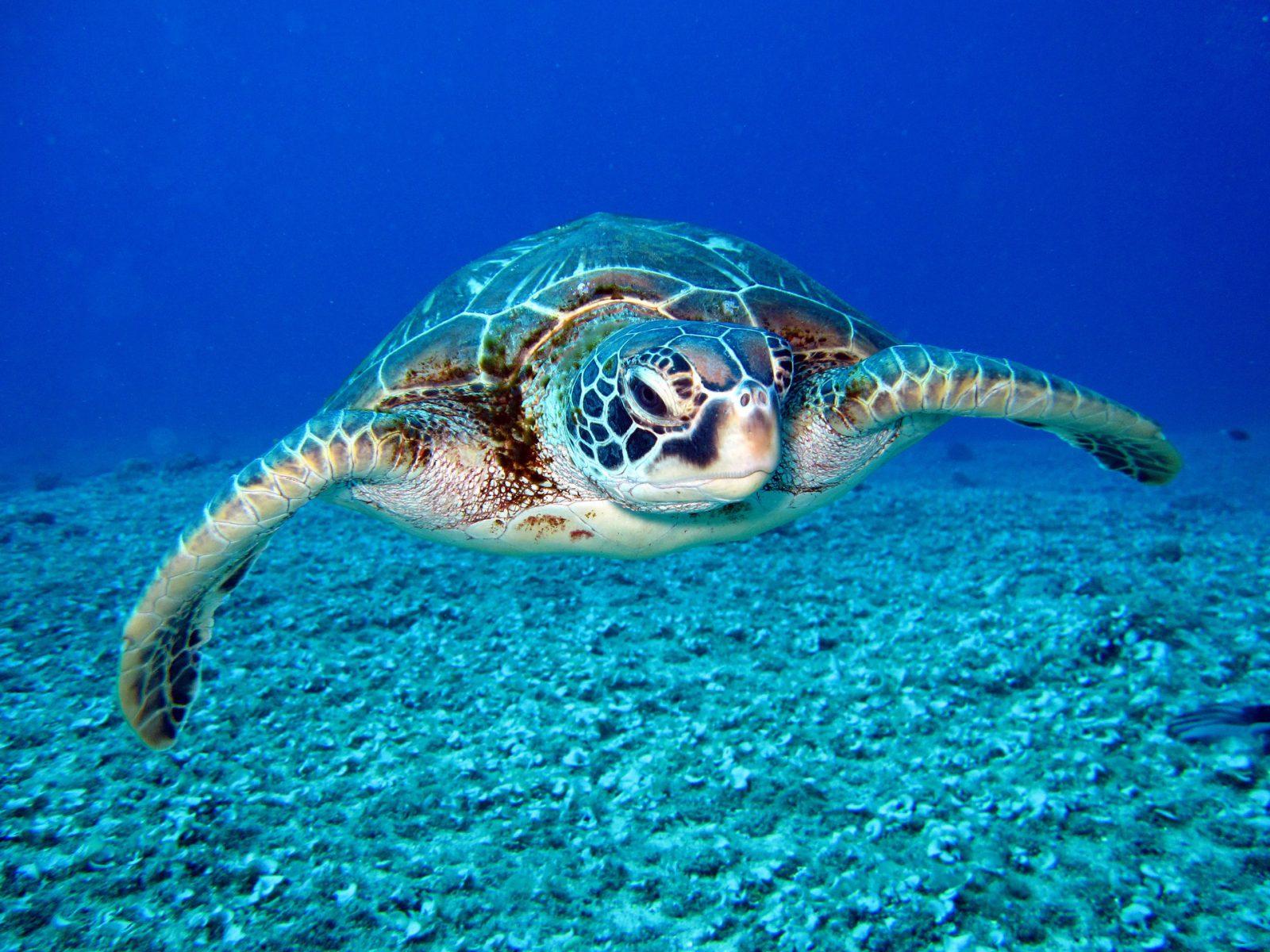 Existem várias espécies de tartarugas marinhas.