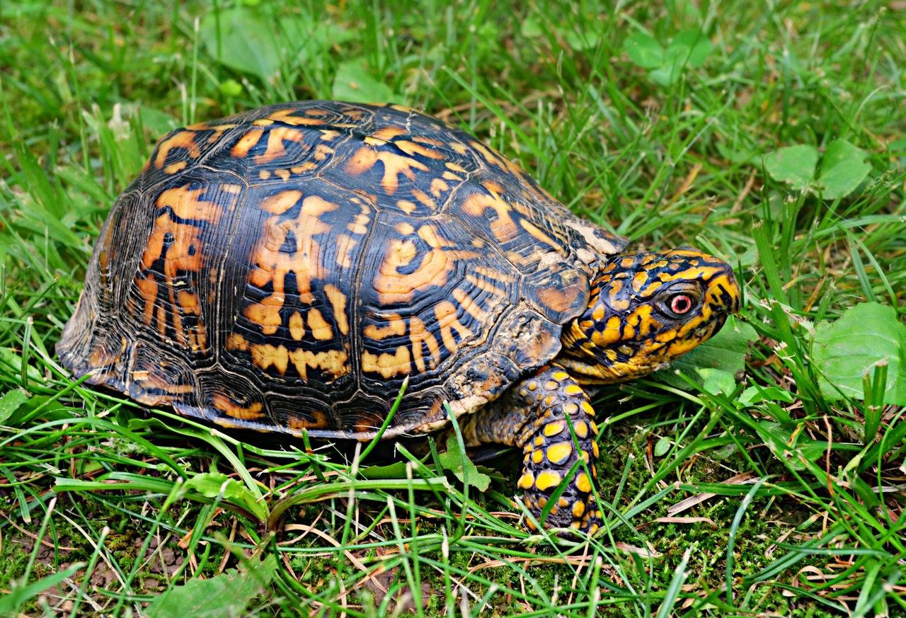 As tartarugas são animais milenares.