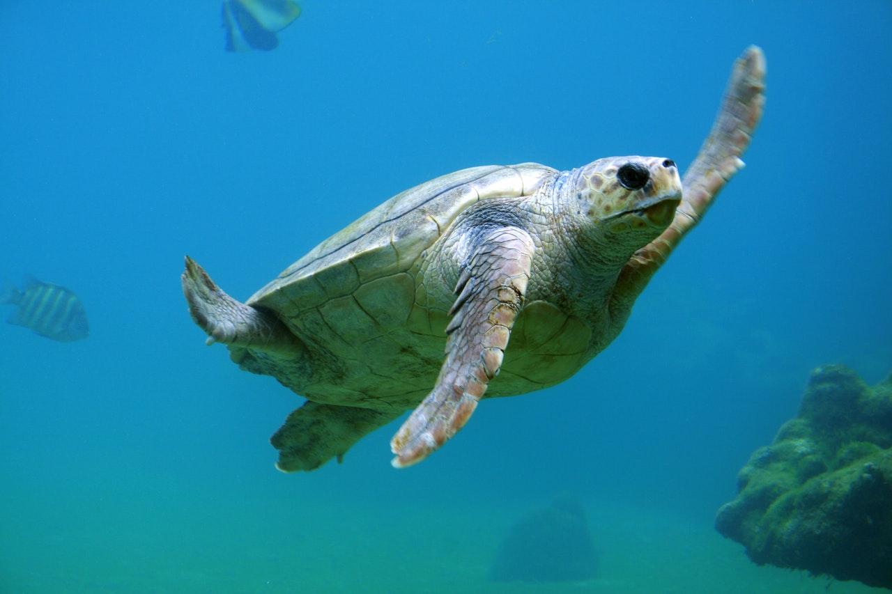 As tartarugas estão por toda parte.
