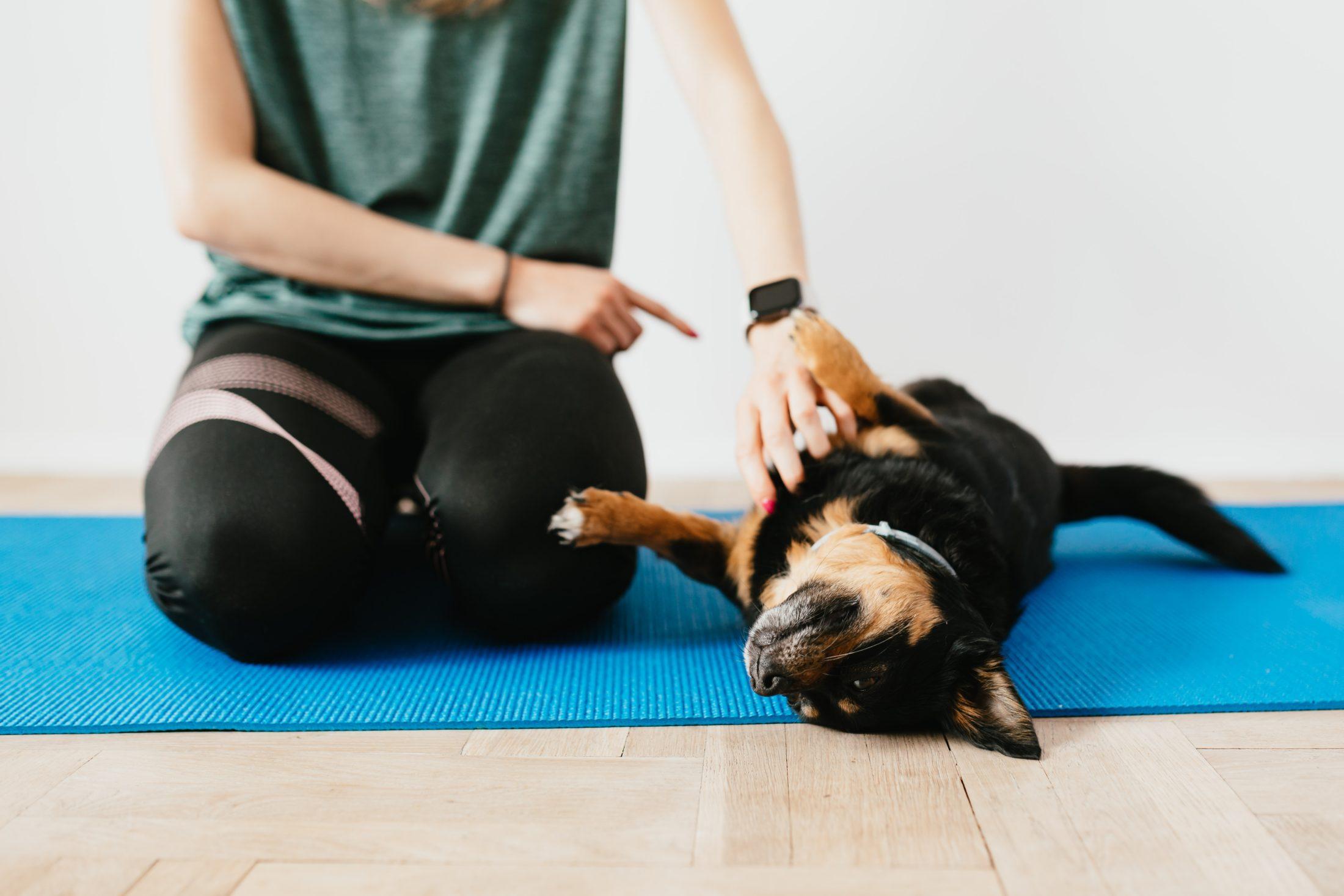 treinador de cachorro treinando cão a deitar