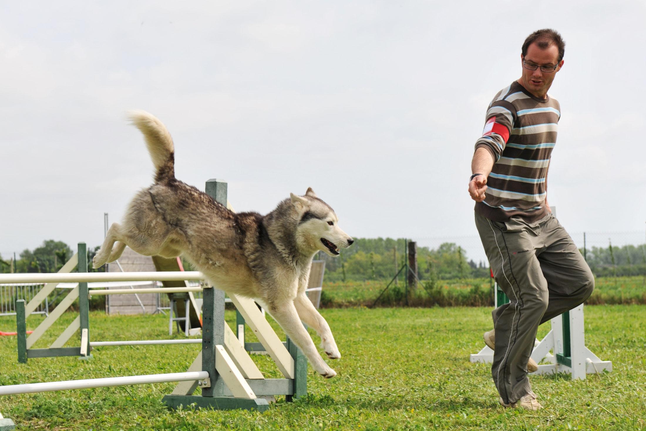 cachorro e tutor treinando juntos agilidade