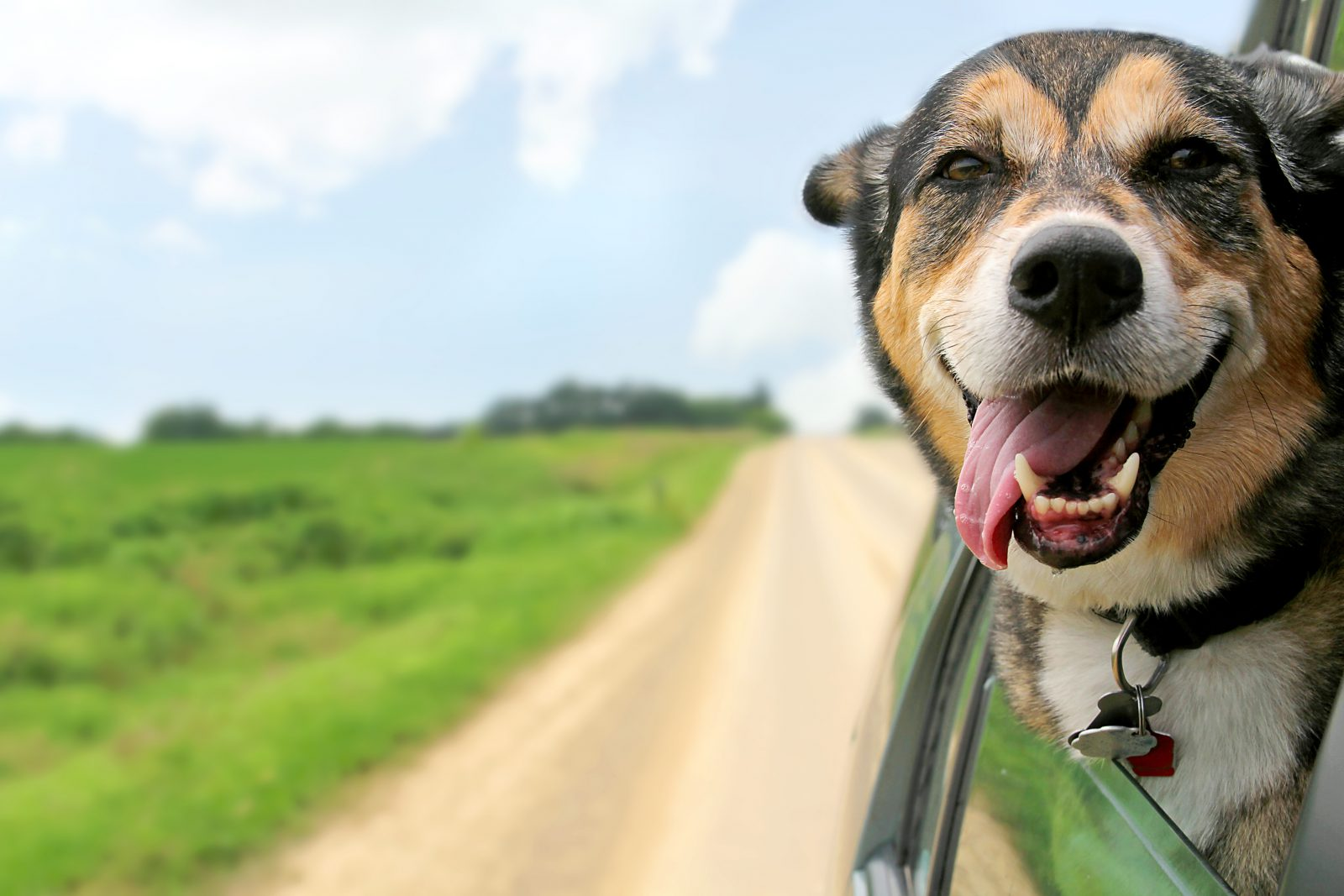 Regras para viajar com cachorro: Cachorro viajando de carro sentindo a brisa gelada do vento.