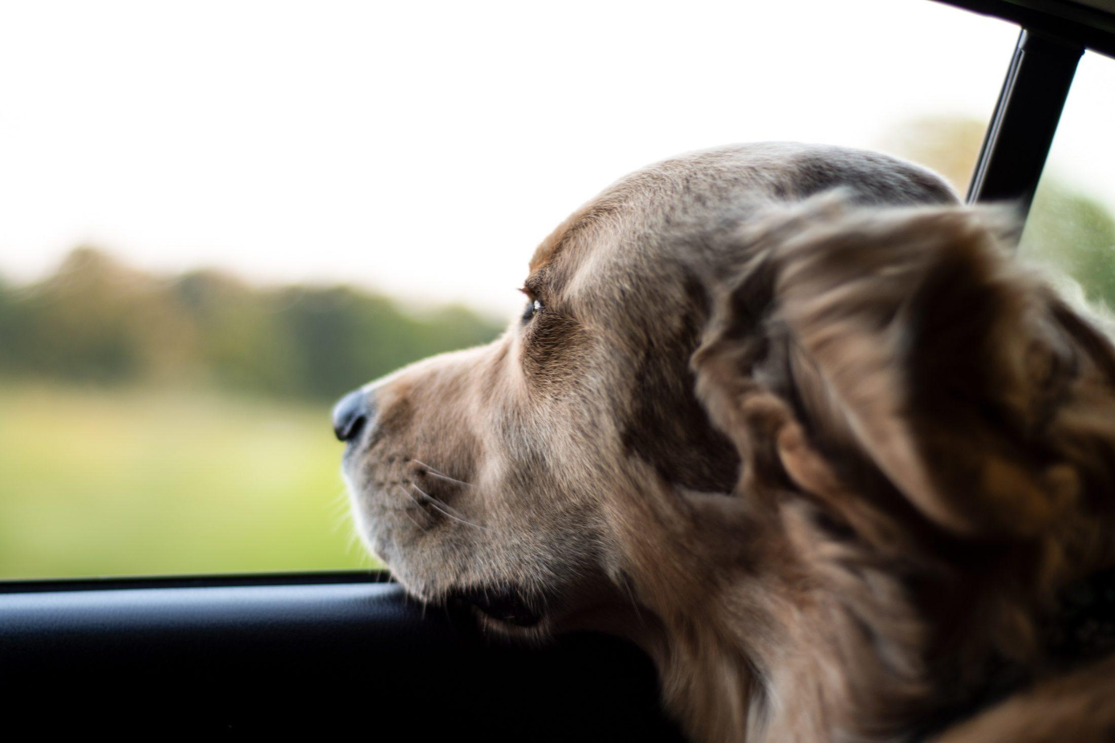 Ao viajar com cachorro programe algumas paradas para desestressar.