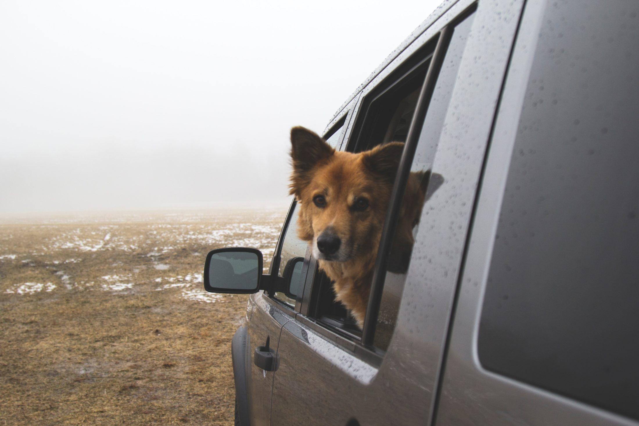 Ao viajar com cachorro por longos períodos deixe que ele sinta abriza pela janela de vez em quando.