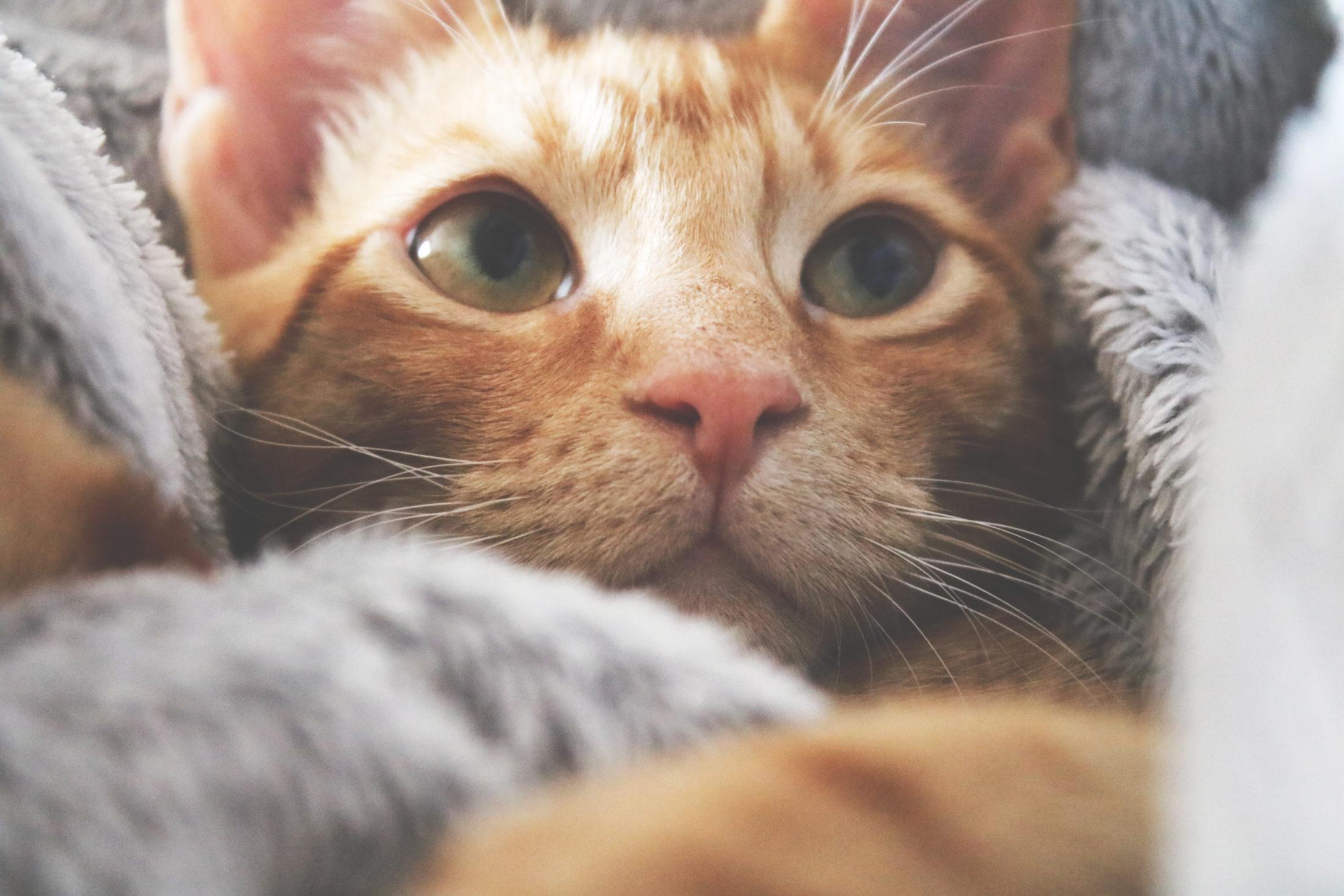 viajar com gato precisa levar cobertor dele