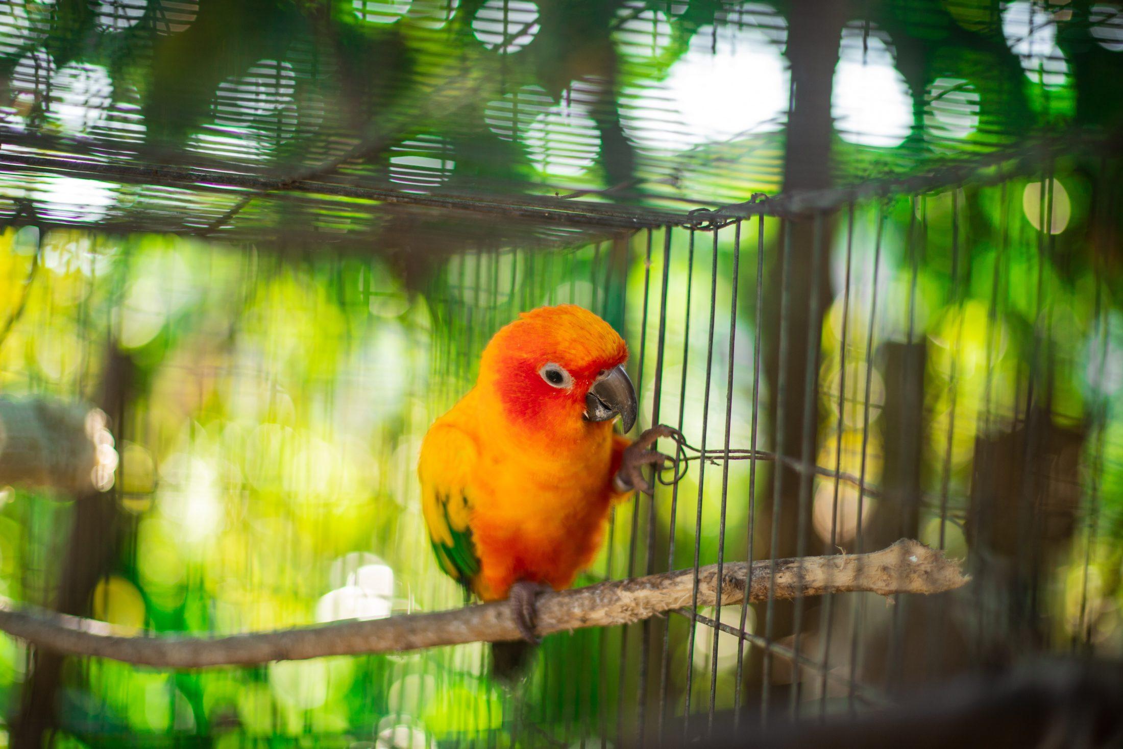 pássaro em viveiro para papagaio