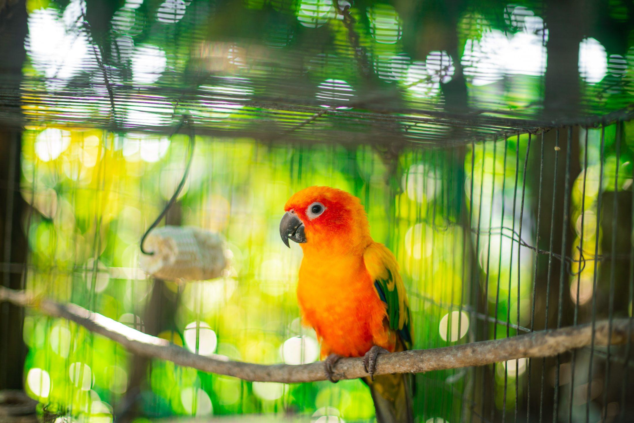 papagaio em viveiro