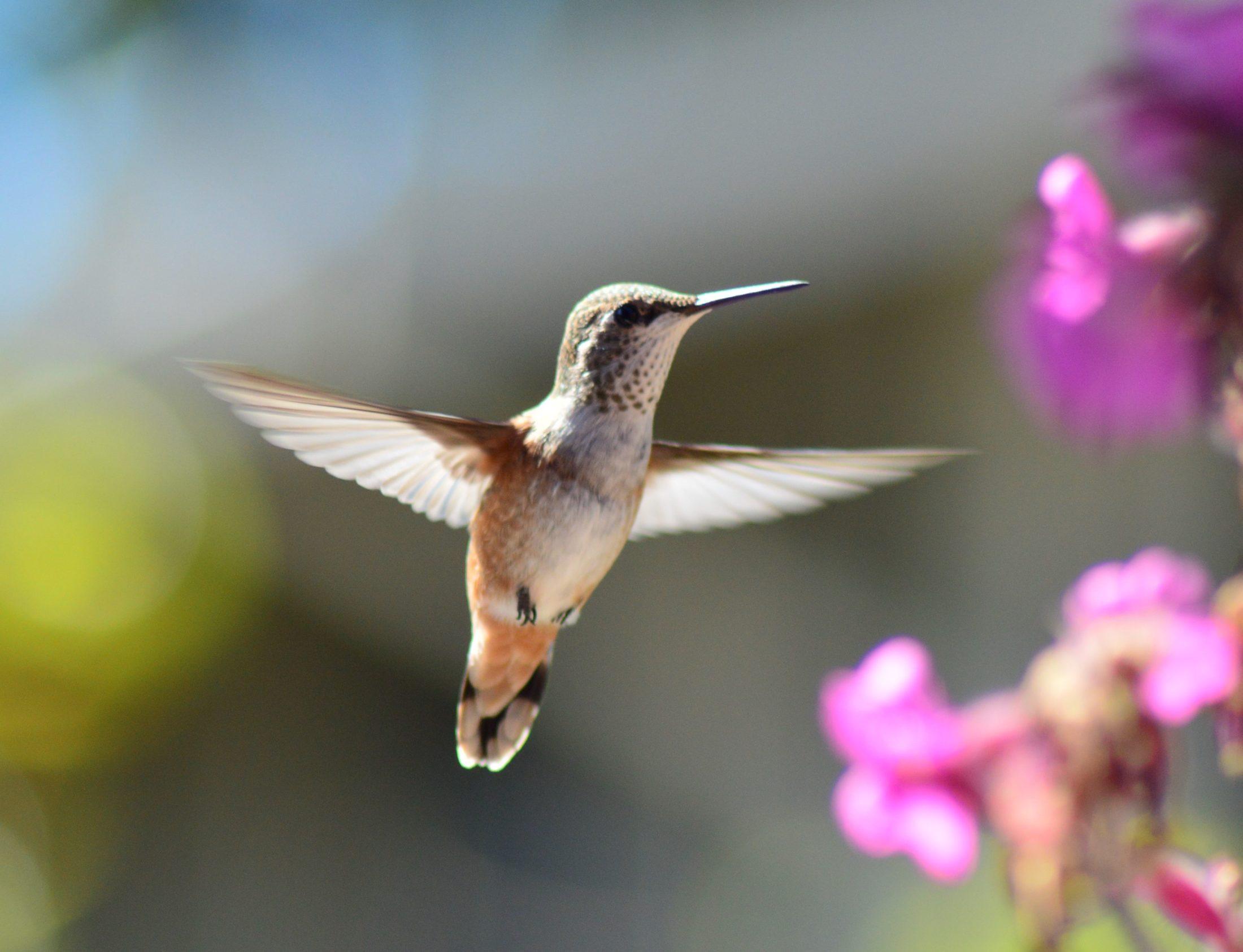 viveiro para pássaro