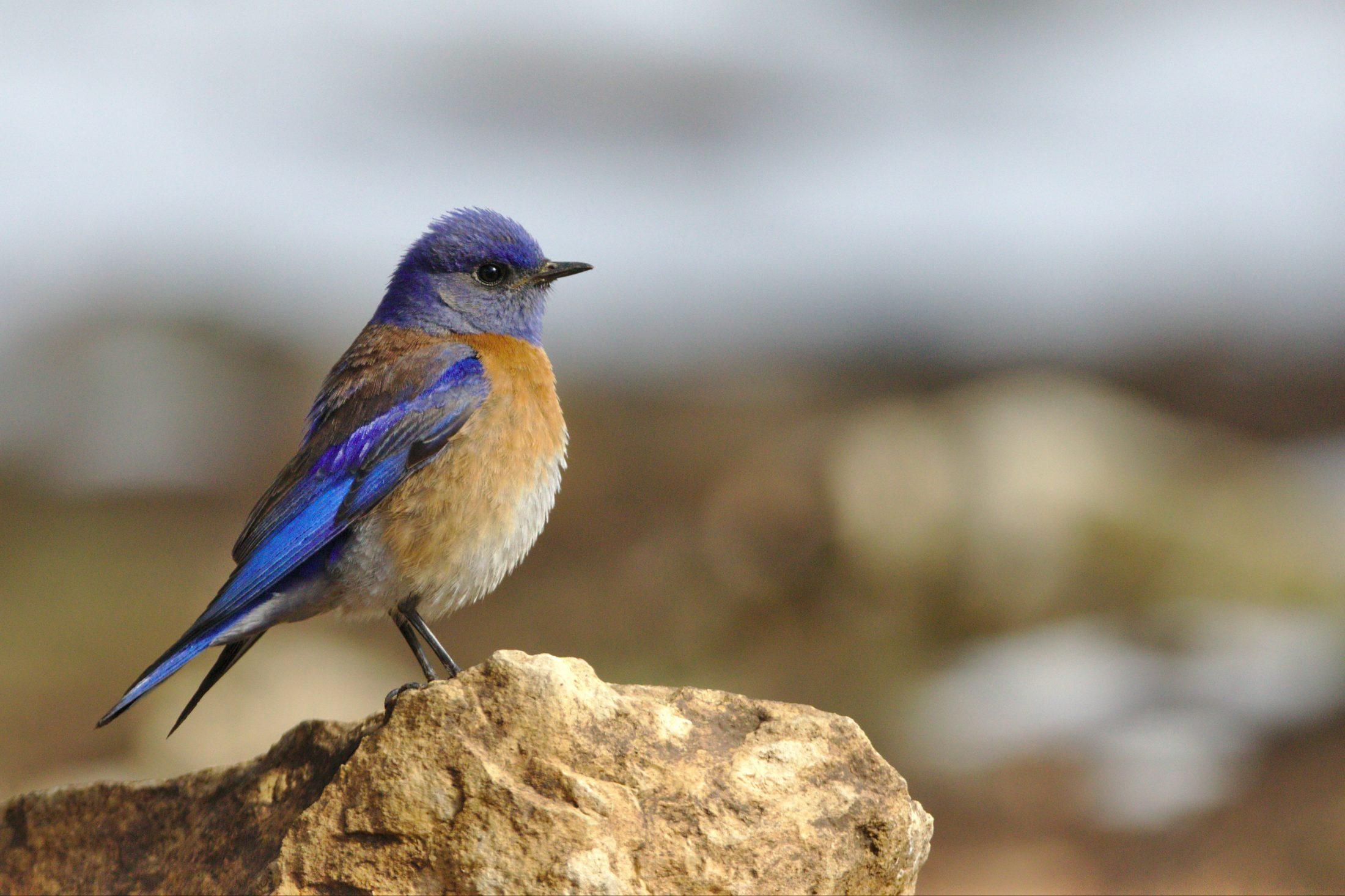passarinho fora do viveiro para pássaro